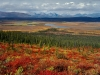 autumn-on-taiga-near-arctic-village-2002