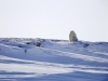 polar-bear-and-cubs-on-arctic-refuge-coastal-plain-2002