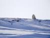 polar-bear-and-cubs-on-arctic-refuge-coastal-plain-2002