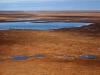 snow-geese-over-arctic-refuge-coastal-plain-2002